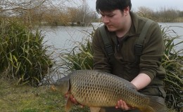 Winter common carp